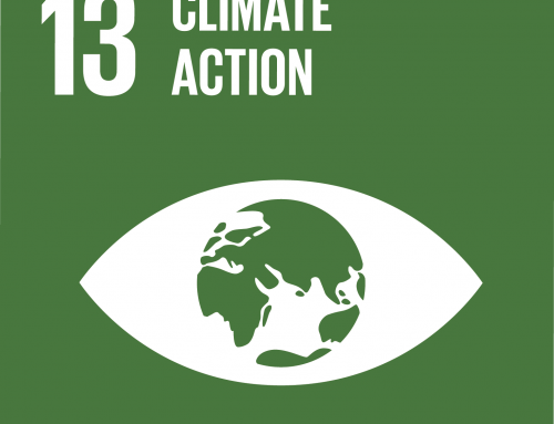 Forests and SDG 13: Climate action